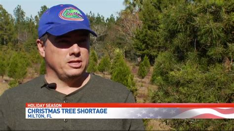christmas tree farm miltin fl milton tree farmer says drought storms to blame for tree shortage wear