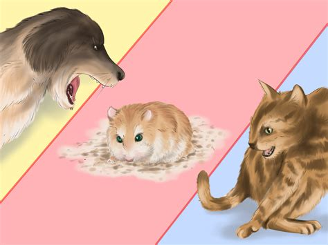 how to care for a how to care for roborovski hamsters with pictures wikihow