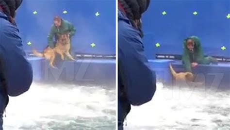 dogs purpose abuse leaked appears to show abuse on set of quot a s purpose quot thatsnonsense