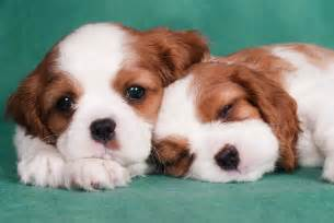 2048 cutest puppies ever