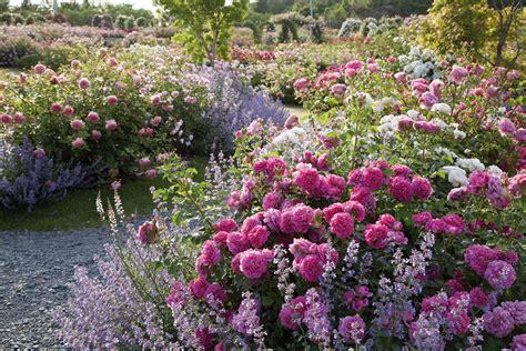 rose gardens gallery