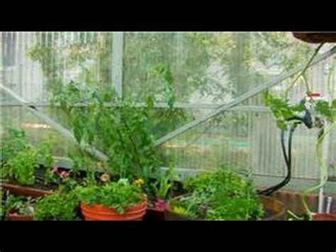 greenhouse gardening a beginners guide to building and growing plants in a greenhouse books vegetable gardening how to garden vegetables in a