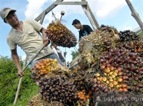 Jual Minyak Kelapa Sawit langkah mengolah minyak dari kelapa sawit
