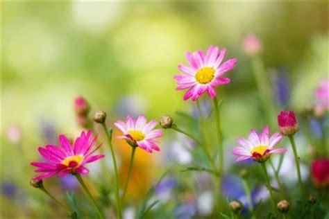 Tas Jinjing Summer Sun 1 jardines y plantas c 243 mo cuidar un espatifilo o quot cuna de
