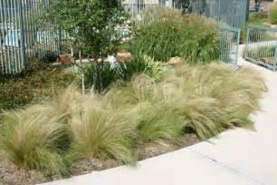 grasses for landscaping plant gallery ornamental grasses haslet tx landscaping