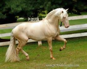 andalusian colors the pink fuzzy slipper writers the gorgeous palomino