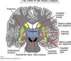 vestibular nerve section recovery best 25 basal ganglia anatomy ideas on pinterest basal