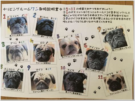 pug cafe kyoto pug cafe quot living room quot this cafe is of pug pug
