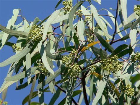 piante da giardino alto fusto piante alto fusto alberi latifolie piante con fusto alto