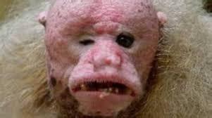 imagenes de animales feos del mundo los animales mas feos y raros del mundo taringa