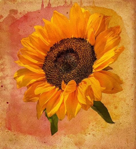 sunflower watercolor tattoo water color sunflower tats