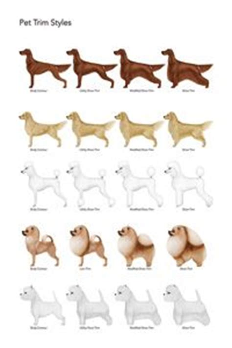 yorkie hair cut chart 1000 images about dog grooming on pinterest dog