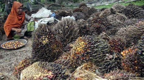 Minyak Kelapa Sawit Turun dorong ekspor minyak goreng iuran bpdp sawit diusulkan