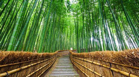 Arashiyama & Nara Todai ji Day Tour from Osaka   Klook