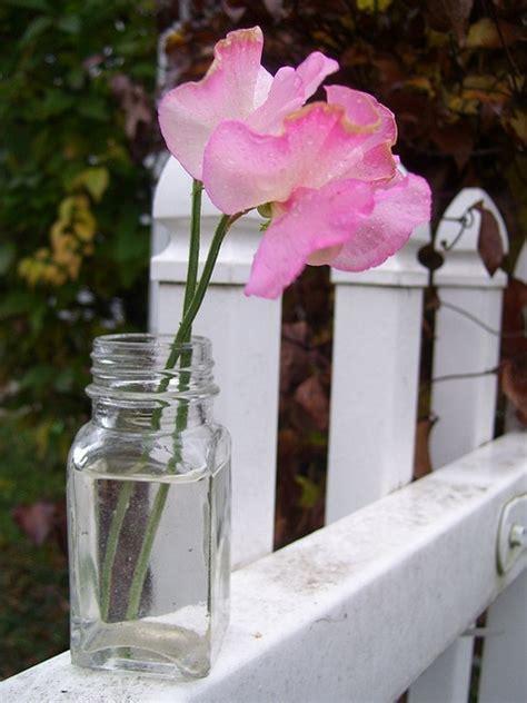 sweet pea swing individual porch swings gardenfuzzgarden