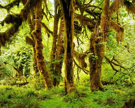 Big Picture Post Nation 3 by Hoh Rainforest