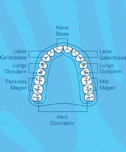 Beschriftung Zahn by Zahn Organ Beziehung Womenweb De