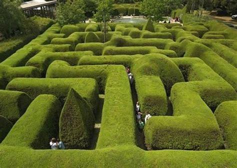 lavender maze ashcombe maze lavender garden shoreham australia