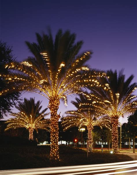lights on a palm tree november 2012 orlando vacation news rumors stories