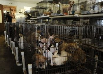 puppy mill pictures house passes puppy mill bill with arguing against measure passes news