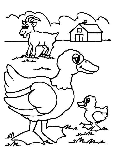farm animals coloring pages preschool farm animal coloring pages for kindergarten murderthestout