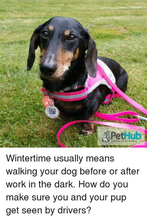 Do You Get Dressed Before Or After You Put On Makeup Fabsugar Want Need by Pet Hub Wintertime Usually Means Walking Your Before