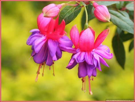 imagenes de flores para descargar imagenes de flores bonitas para descargar gratis