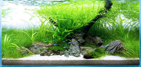 aquascaping magazine aquascaping world magazine international aquatic plant