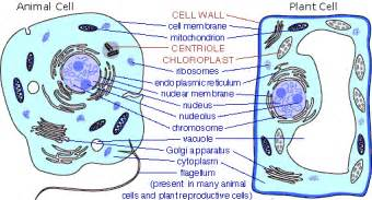 cells of living beings characteristics of plant cells and