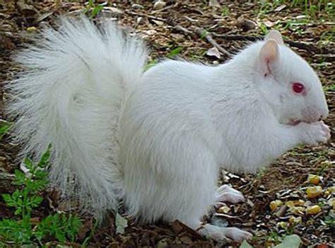 imagenes de animales albinos david el gnomo de d pino animales albinos que curiosos