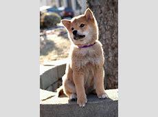 Foto de Siempre a tu lado. Hachiko - Foto 6 sobre 46 ... Hachiko Movie