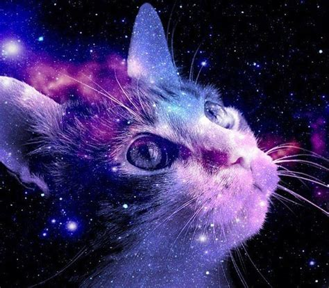 space cat wallpaper tumblr outerspace cat tumblr