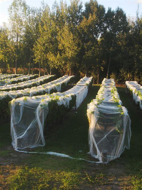 b q fruit netting images