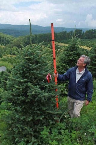 cartner christmas tree farm buy wholesale