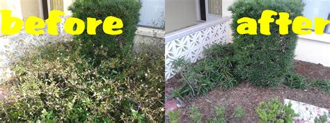 backyard cleanup services new port richey yard cleanup haul away new