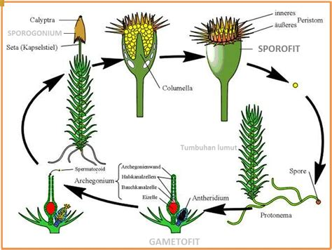 biologi gonzaga test kingdom plantae