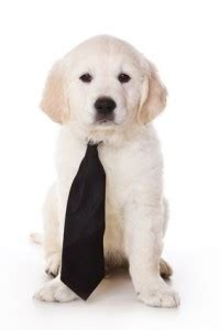 puppy socials san francisco highly recommended activity puppy socials doggie business