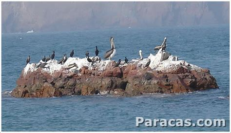en la reserva nacional de paracas se inicia la temporada de verano y reserva nacional de paracas peru rnp