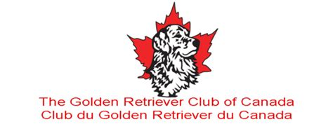 golden retriever washington state golden retriever club washington state dogs in our photo