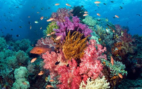 Coral Reef L by Sle Pictures Images Coral Reef Hd Wallpaper And