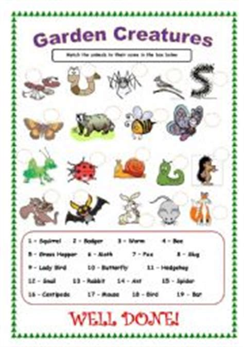backyard bugs 101 flashcards for discovering insects books worksheet garden creatures