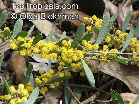 tropical plant catalog toptropicals com
