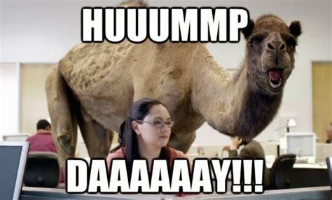Wednesday Hump Day Meme - produce or else jerry mabbott s blog