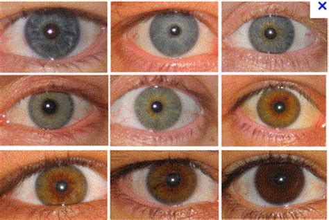 eye color quiz eye what is your real personality