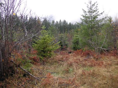 Finding Grouse on Washington and Oregon National Forests