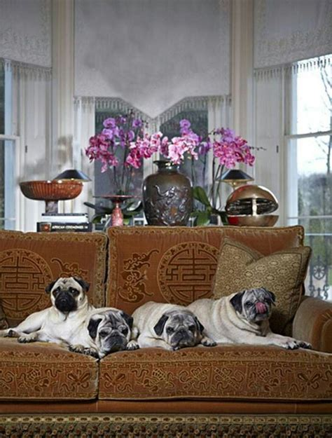 valentinos pugs 3020 best images about pugs on pug brindle pug and black pug