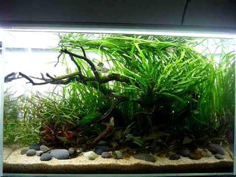 cm nature aquarium youtube