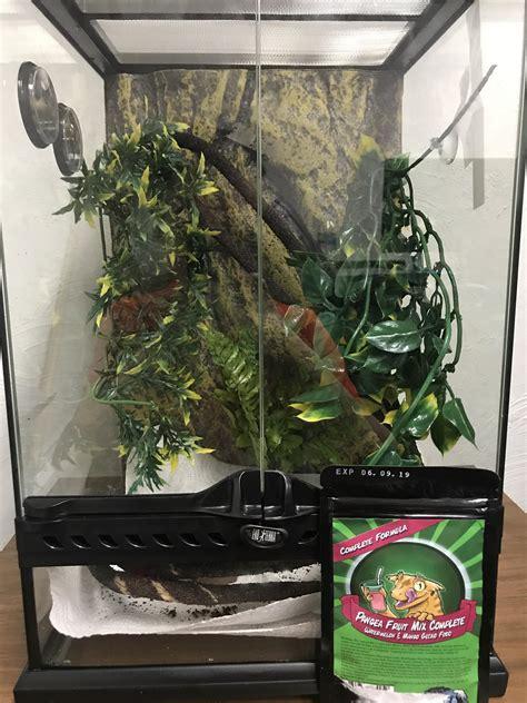 terrarium    set    crested gecko im