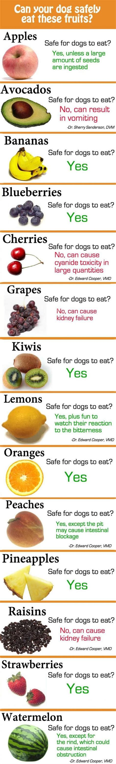 can dogs eat fruit your fruit and dogs on