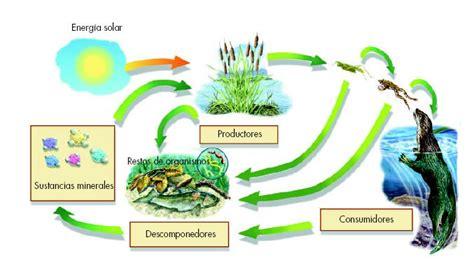 imagenes de ecosistemas faciles para dibujar carpetas escolares ecosistemas en dibujos